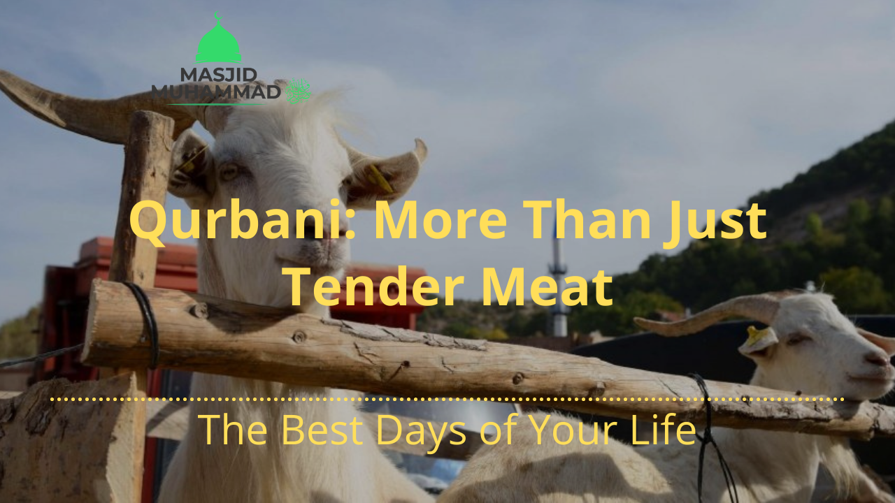 Qurbani: More Than Just Tender Meat
