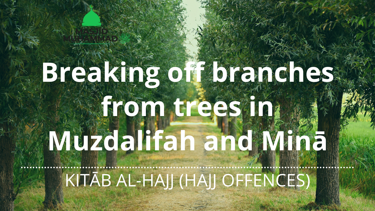 Breaking off branches from trees in Muzdalifah and Minā